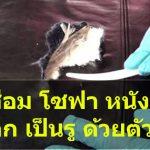 วิธีซ่อมโซฟา